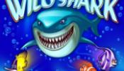 wild_shark