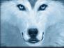 Wm_wolf