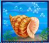 Bd_shell